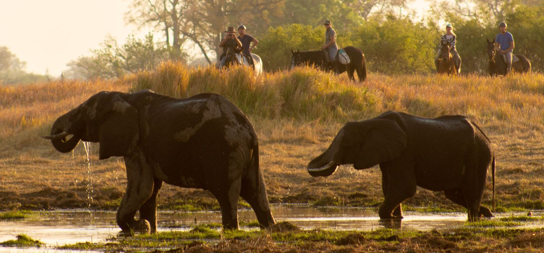 Photo from the Delta Trail (Ride Botswana) ride.