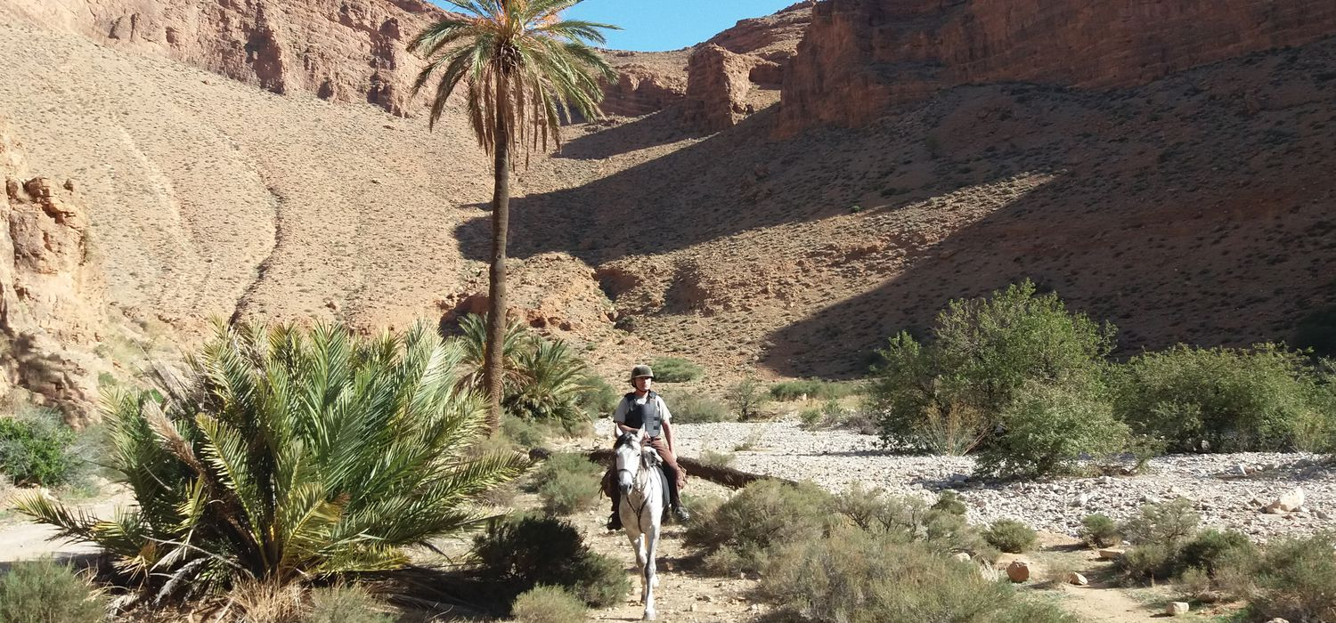 Photo from the Great South Ranch (Morocco) ride.
