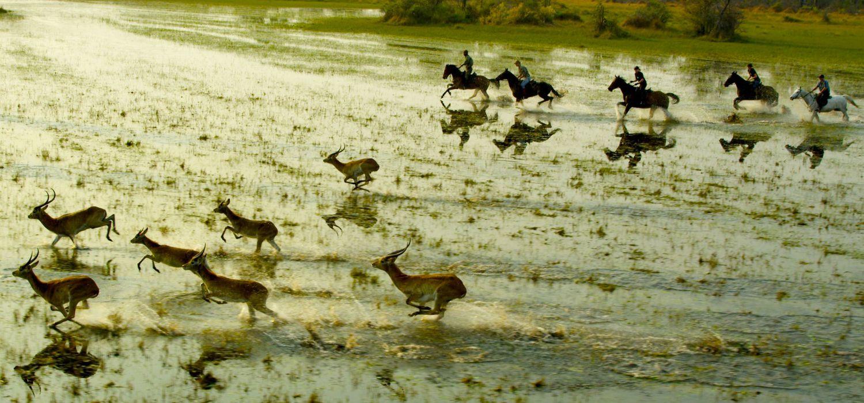 Photo from the Okavango Horse Safaris (Botswana) ride.