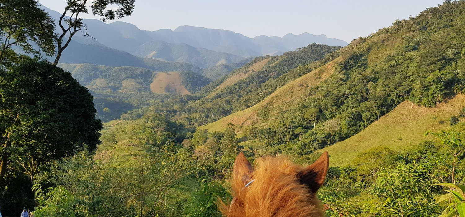 Photo from the Darwin's Rainforest ride.