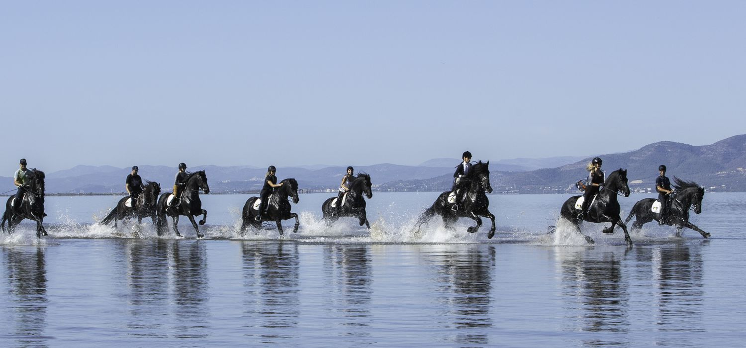 Photo from the Friesian Dressage and Beach ride.