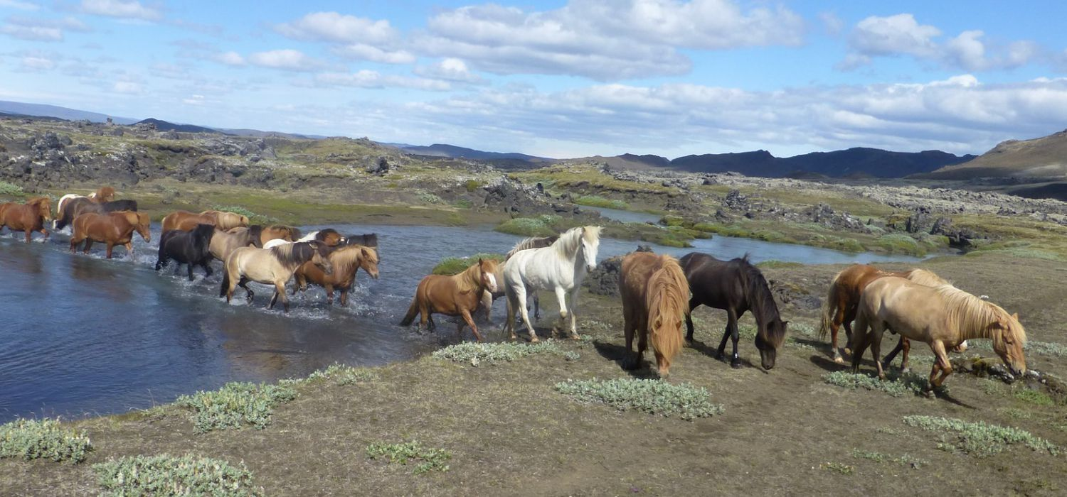 Photo from the Southern Comfort (Iceland) ride.