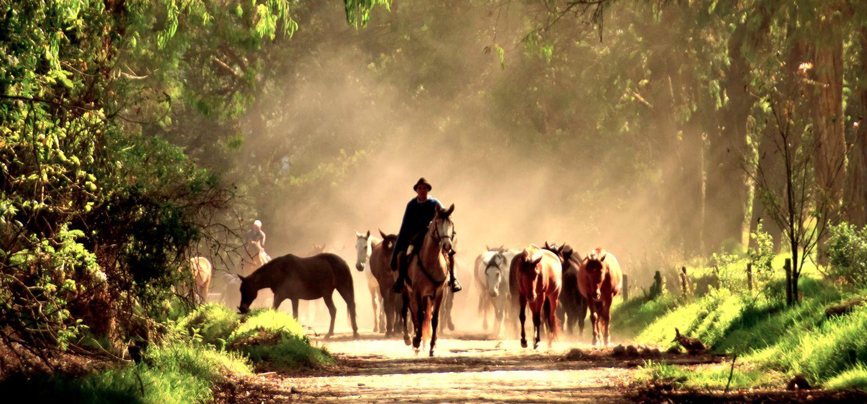 Photo from the Hacienda Zuleta ride.