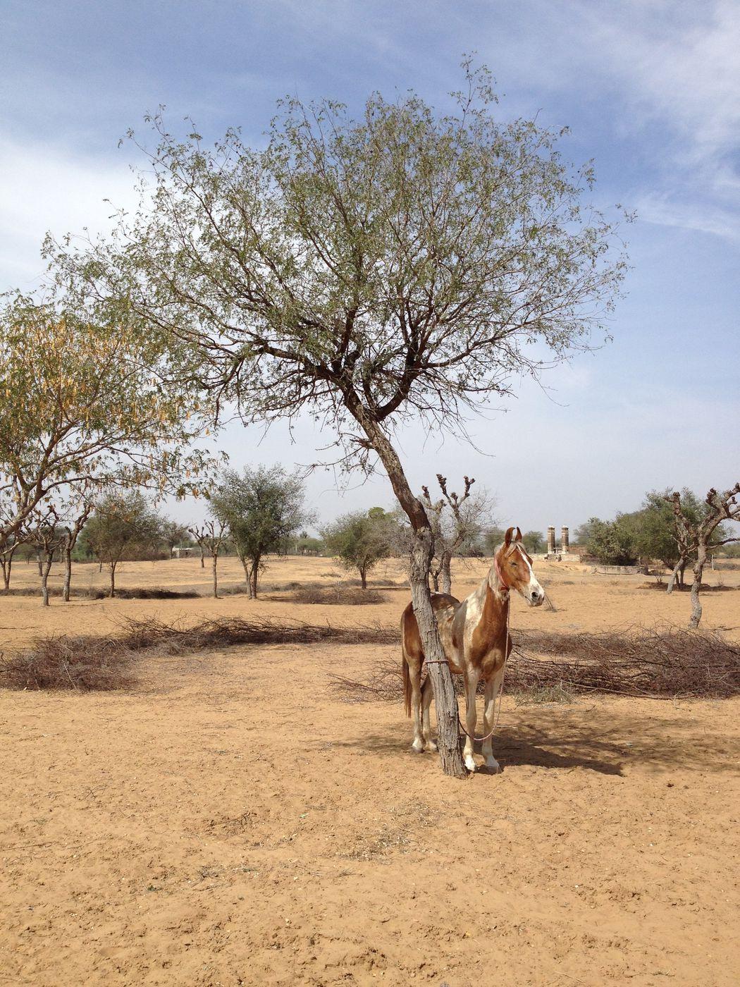 Rajasthan Mini Trail itinerary.