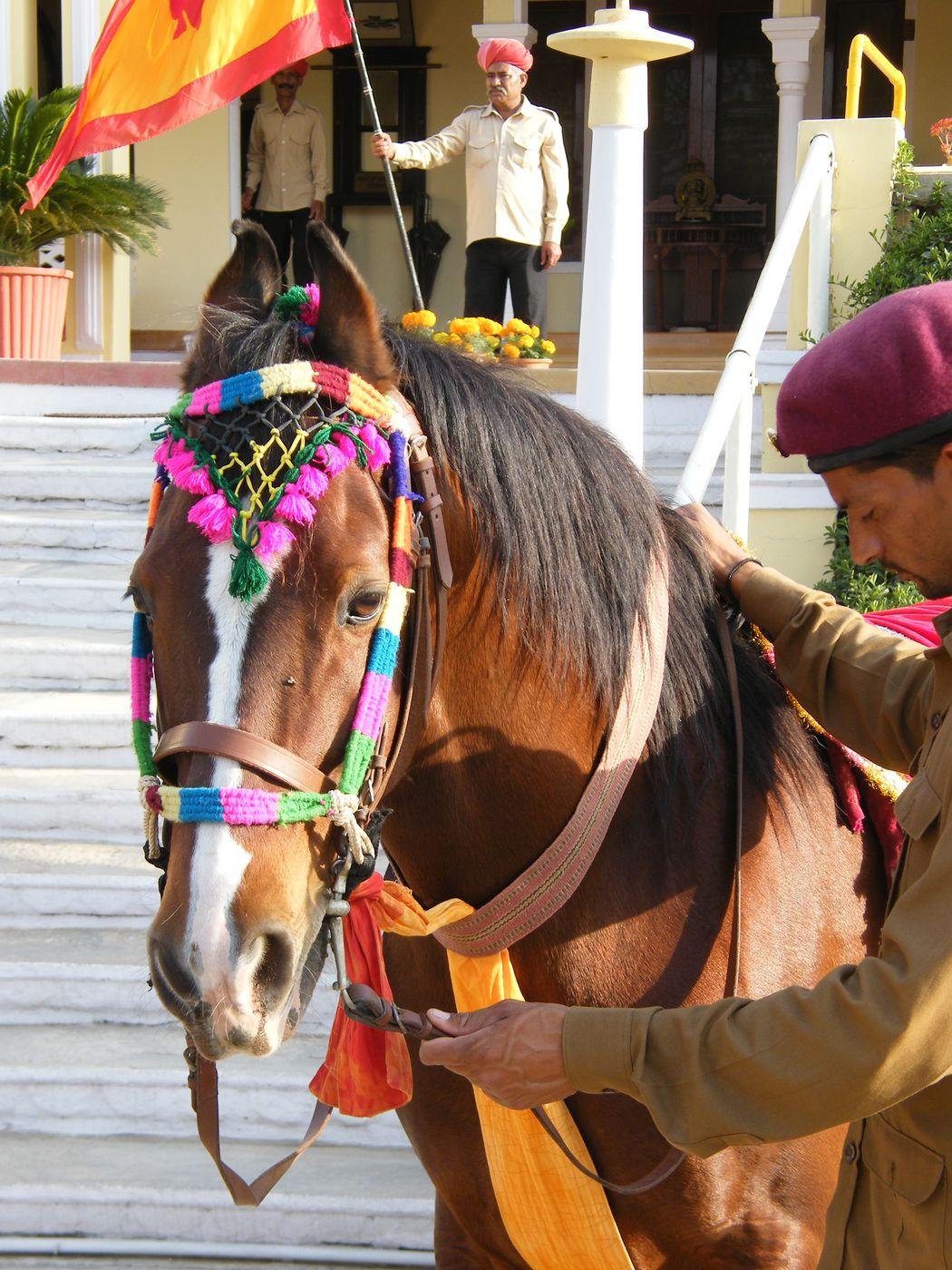 Marwari Horses and Indian Culture itinerary.