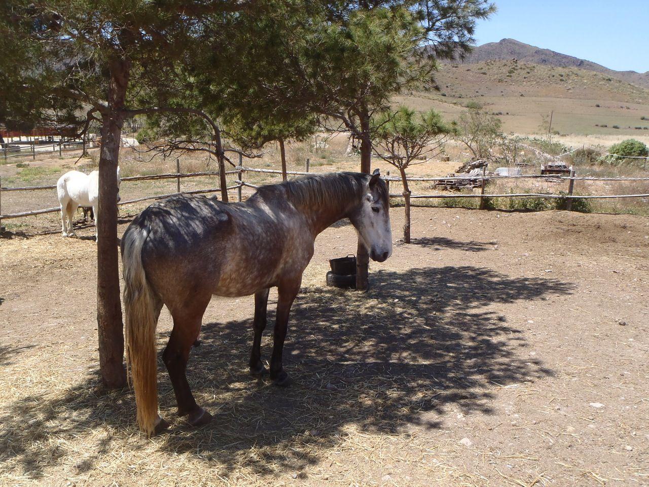 Natural Horsemanship (Parelli) itinerary.