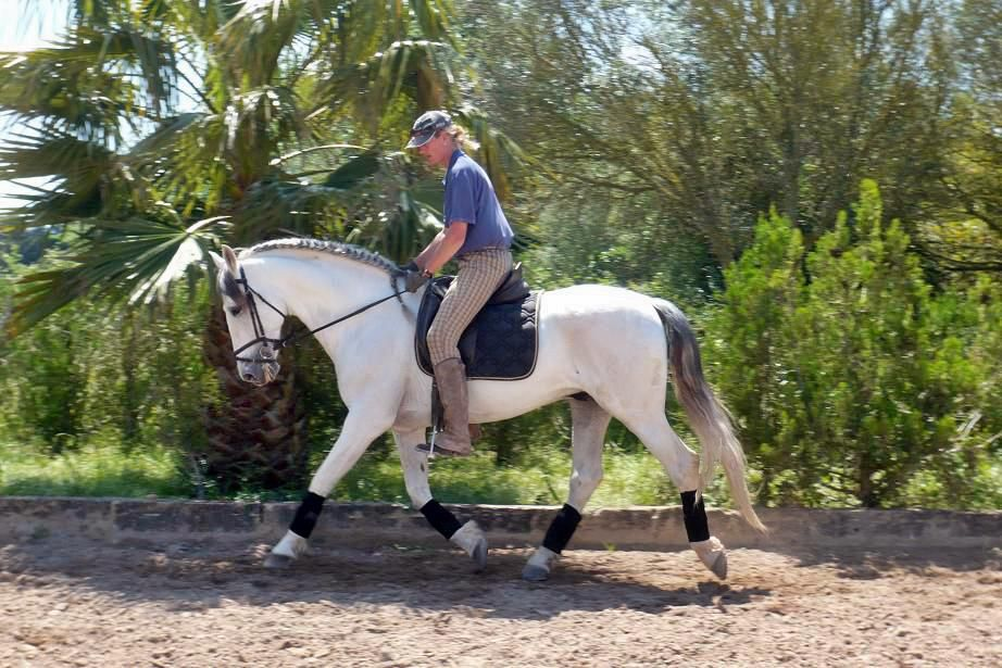 Dressage with P.R.E Stallions itinerary.