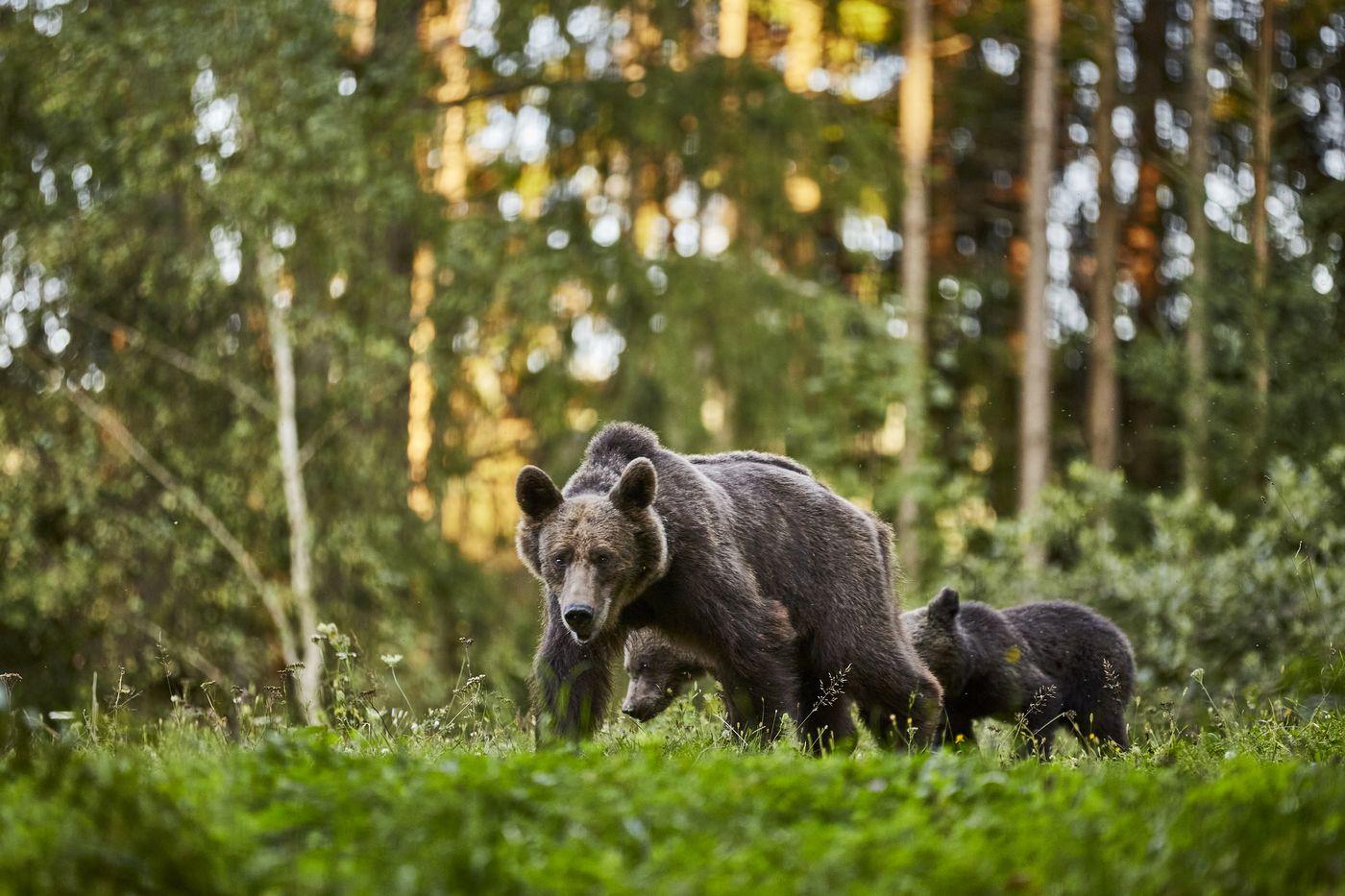 On Bear's Land itinerary.