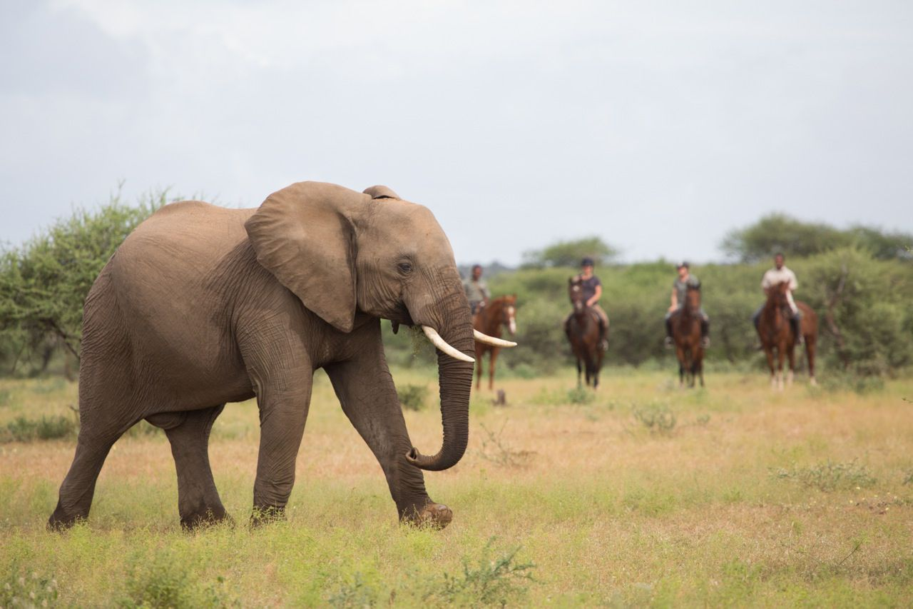 Tuli Safari itinerary.