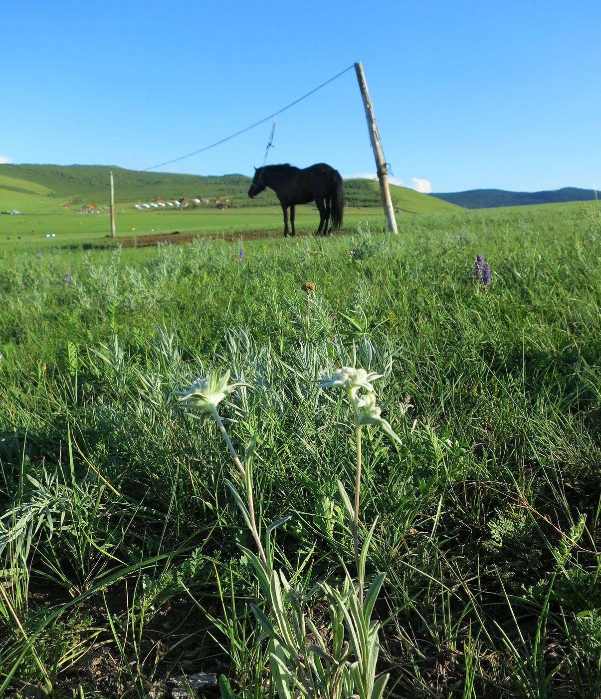 Mongolia Express Trail itinerary.