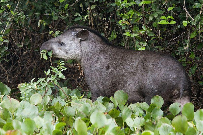 Wildlife & Wetlands Safari itinerary.