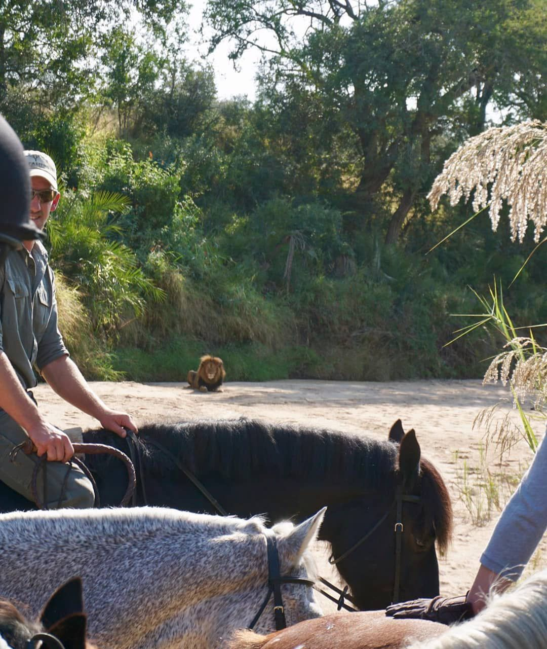Big Five Ride & Dine Safari itinerary.
