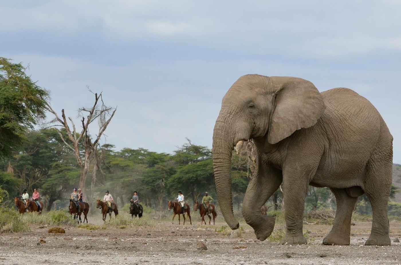 Kilimanjaro Elephant Ride itinerary.