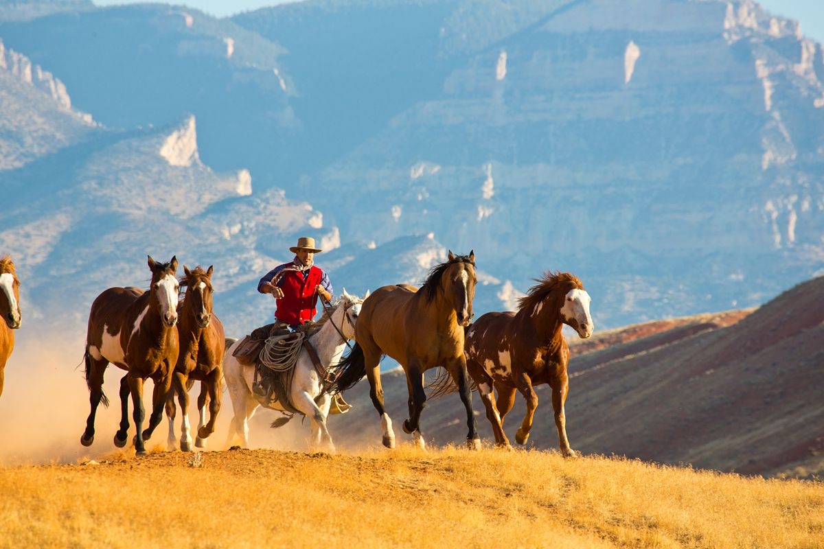 Advanced Riding Programme - All About Riding! itinerary.