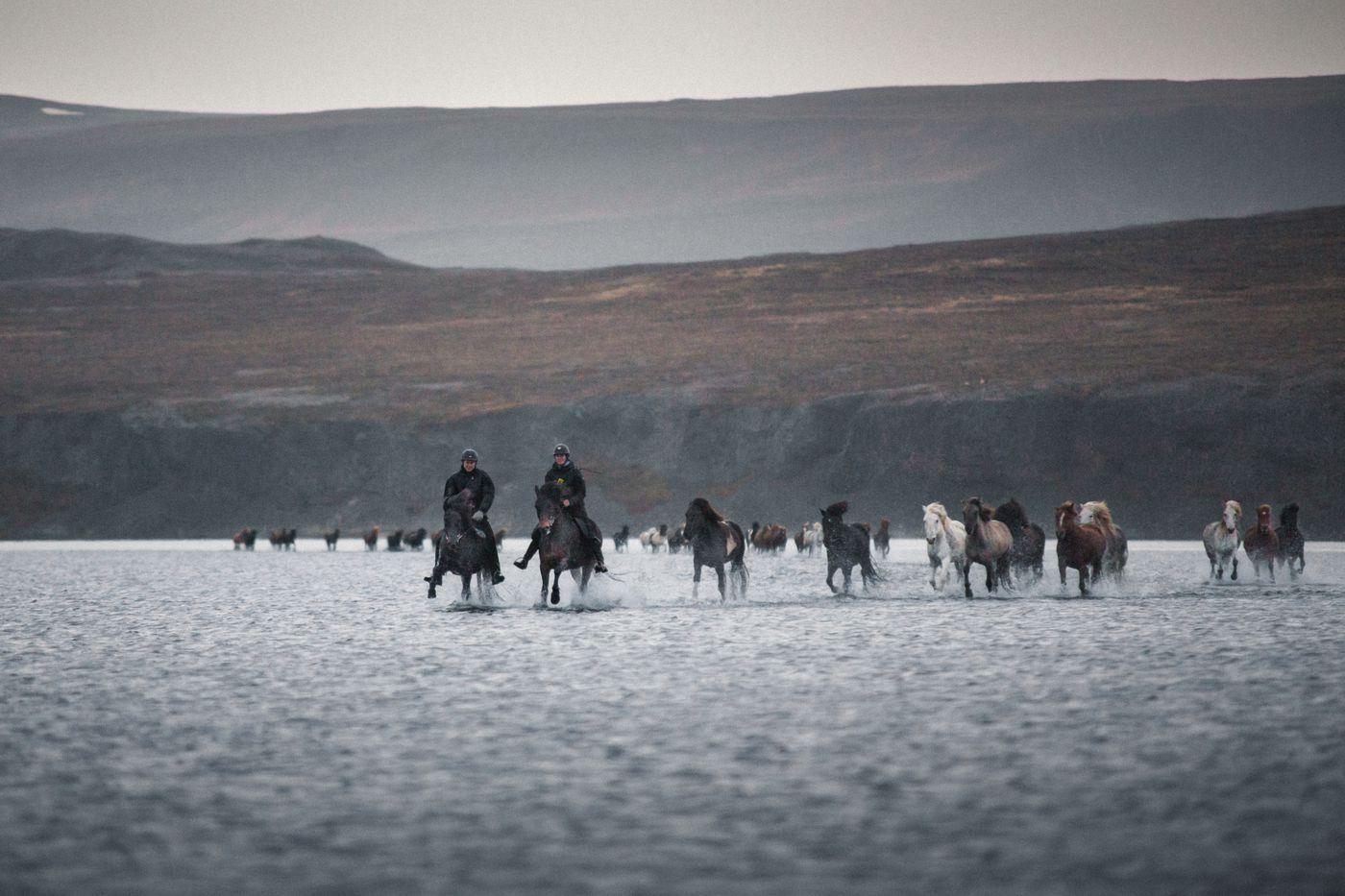 Horse Round Up in Víðidalstungurétt itinerary.