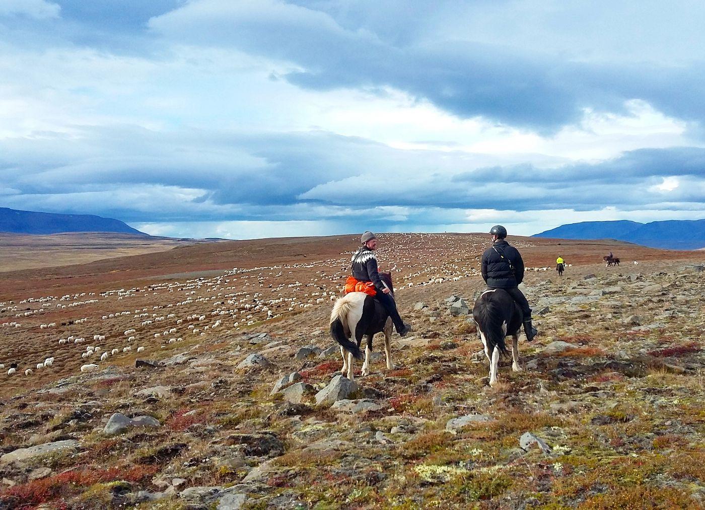 Sheep Round-Up Reykjarettir itinerary.