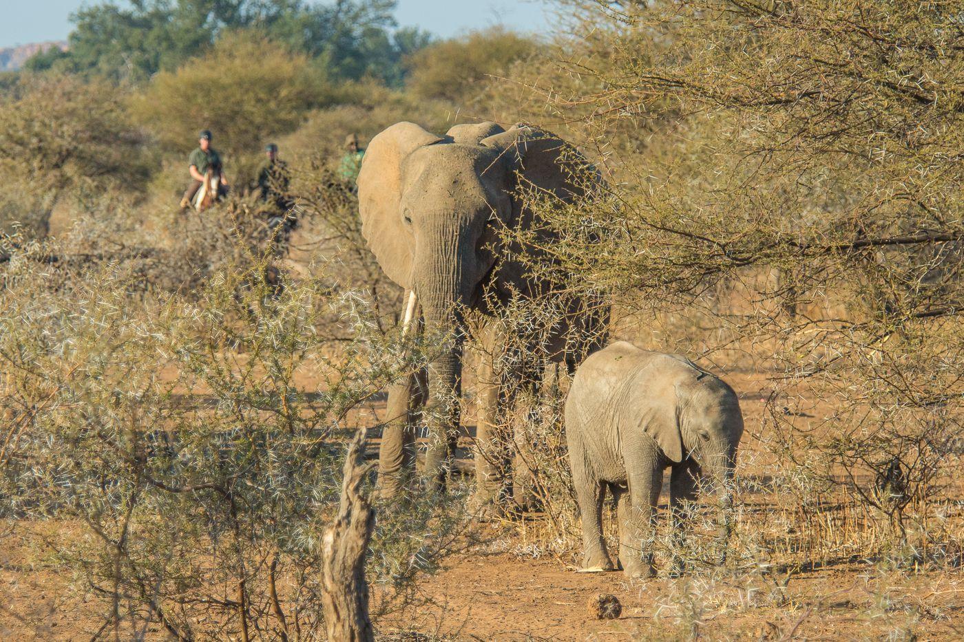 Best of Botswana Safari itinerary.