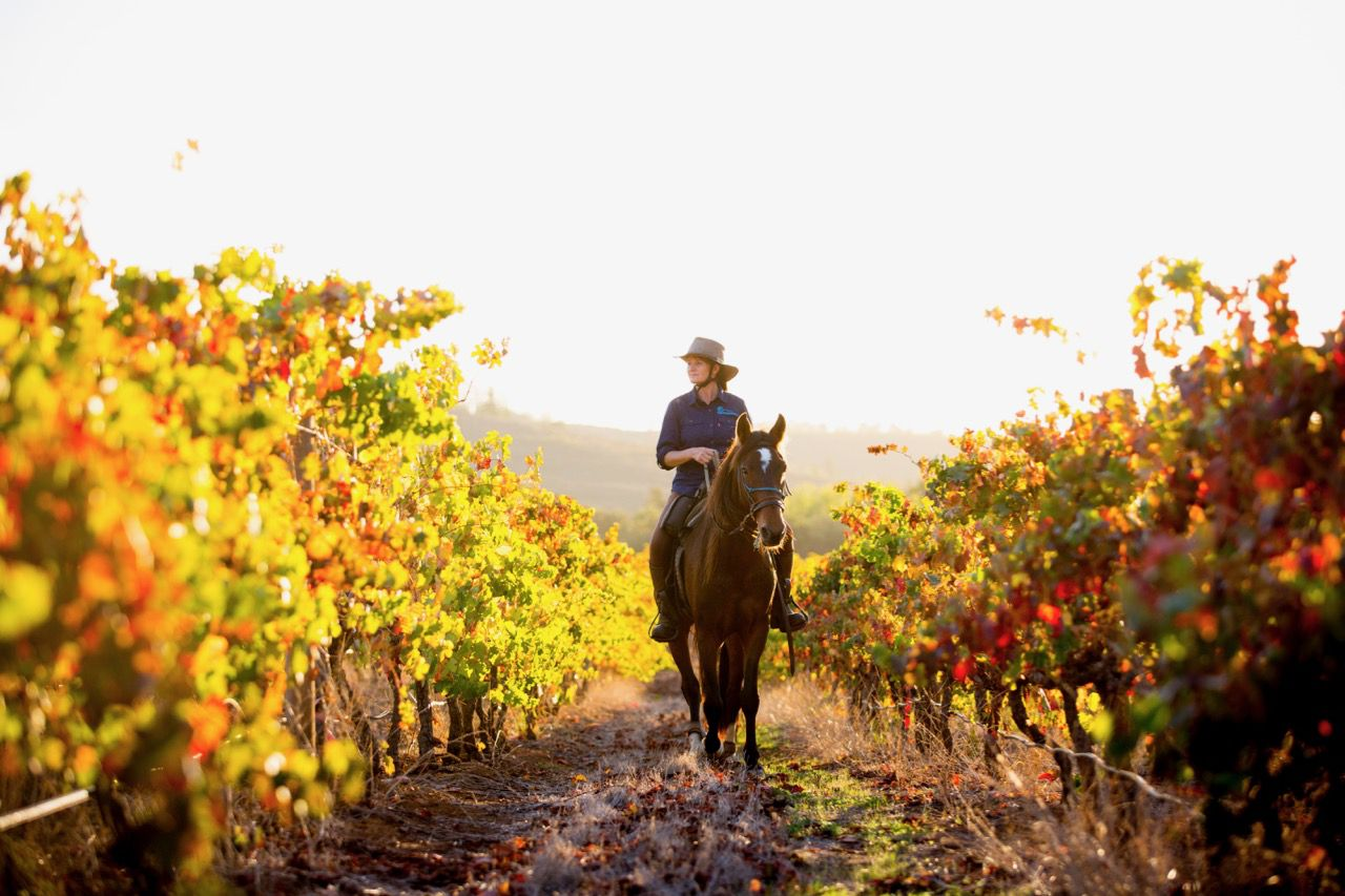 Cape Gourmet Wine Trail itinerary.