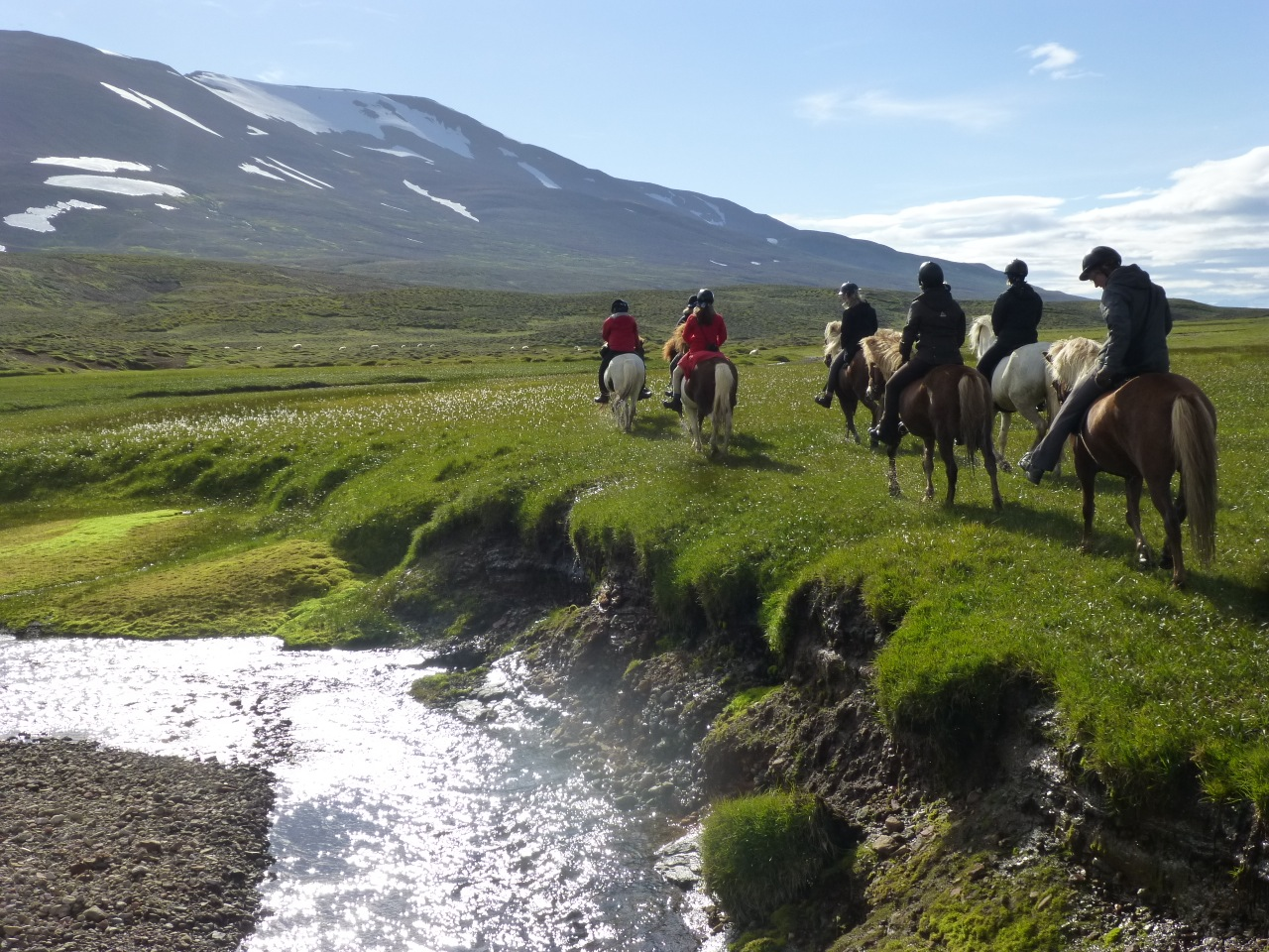 Meet the Icelandic Horse | 1-Hour Riding Tour | Guide to ... |Icelandic Horse Tours
