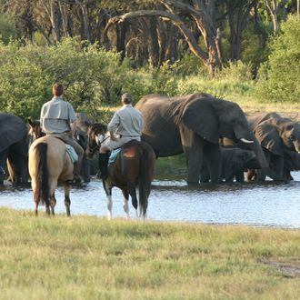 Photo from the Ride Zimbabwe (Varden Safaris) ride