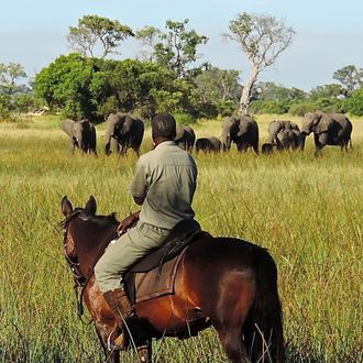 Photo from the Okavango Horse Safaris ride