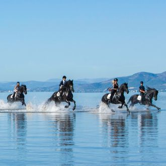 Photo from the Friesian Dressage and Beach ride