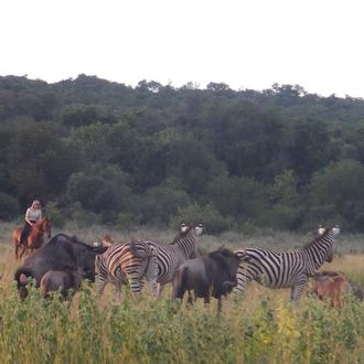 Photo from the Waterberg Big Five Safari ride