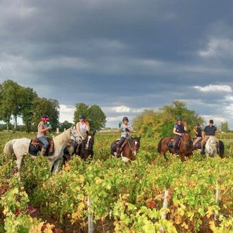 Photo from the Vineyards of Champagne ride