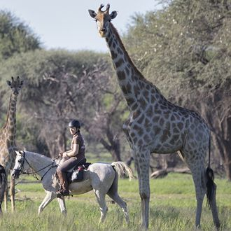 Photo from the Okapuka Horse Safaris ride