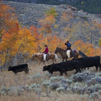 Photo from the Wyoming Lodge and Working Guest Ranch ride